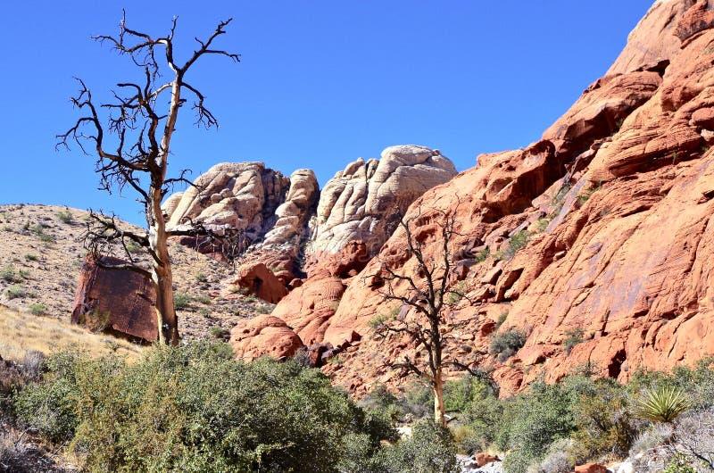 Kalikåbehållare som är röda vaggar naturvårdsområde, sydliga Nevada, USA royaltyfria bilder