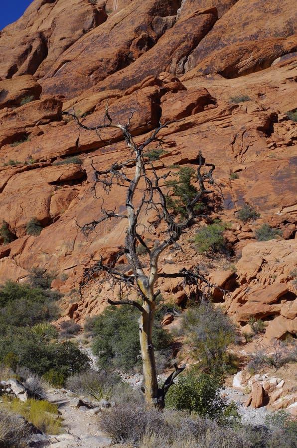 Kalikåbehållare som är röda vaggar naturvårdsområde, sydliga Nevada, USA royaltyfri fotografi