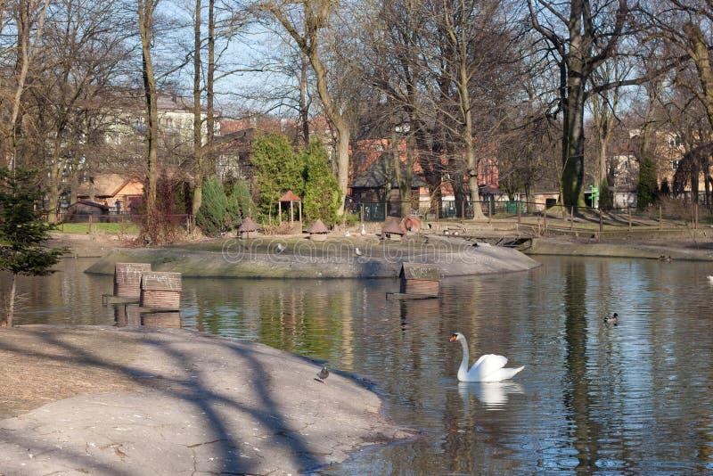 KALININGRAD, RÚSSIA - 29 DE MARÇO DE 2014: Lagoa pequena para pássaros no centro do jardim zoológico de Kaliningrad fotos de stock