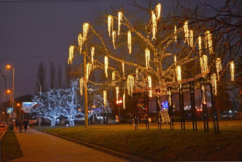 Kaliningrad Ryssland De glänsande dekorativa träden på Mira Avenue arkivfoton