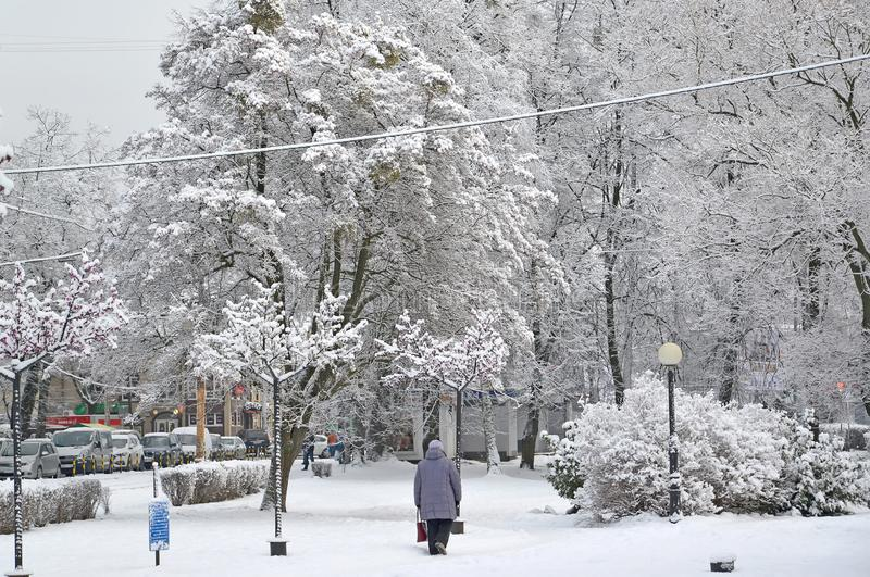 Kaliningrad Ryssland Ett vinterstadslandskap på den Festivalnaya avenygatan royaltyfri foto