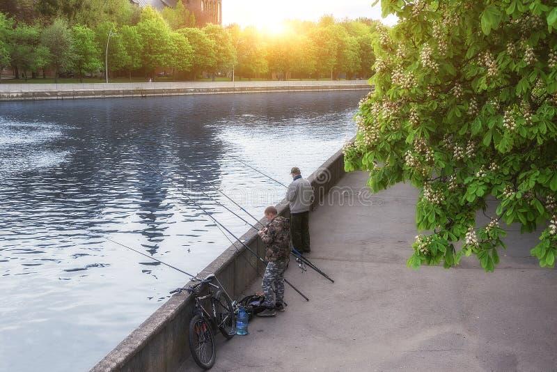 Kaliningrad Ryssland 05 01 2019 fiskare som fiskar i staden fotografering för bildbyråer
