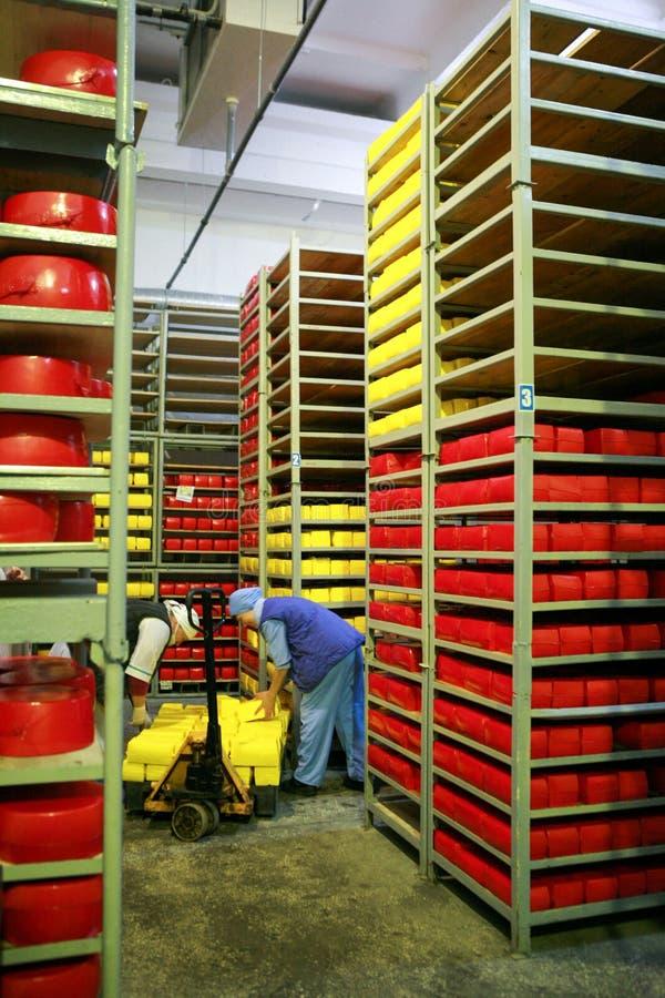 KALINKOVICHI, BIELORRUSIA - 22 de septiembre de 2011: Cosechadora para la producción de queso Máquinas, mecanismos y equipo imagen de archivo