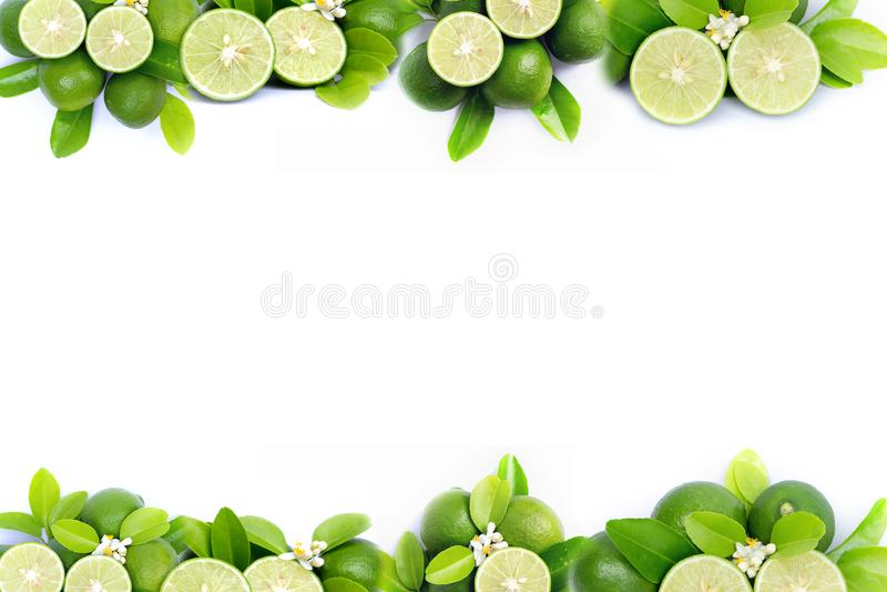 Kalk und grüner Blattrahmen und -grenze auf weißem Hintergrund stockbilder