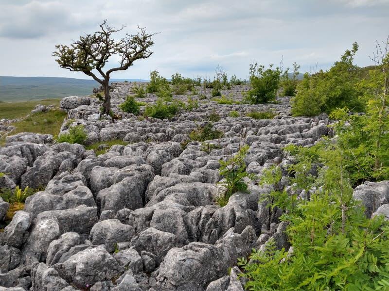 Kalksteenbestrating, het Litteken van het Heuvelkasteel, Conistone, Wharfedale, de Dallen van Yorkshire, Engeland stock foto