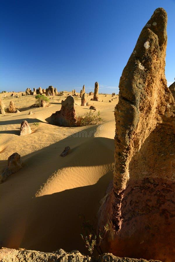 Kalksteenvormingen in Toppenwoestijn Nambung Nationaal Park cervantes Westelijk Australië australië stock fotografie