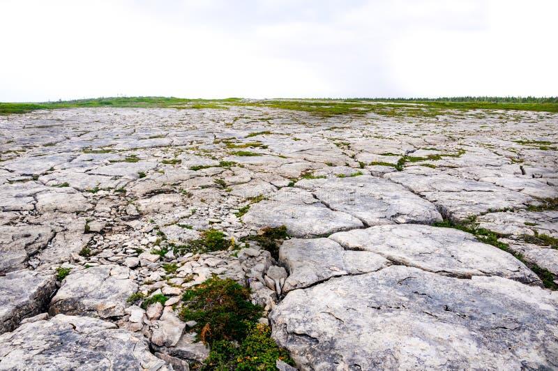 Kalkstein Barrens, Blumen-Bucht stockfotos
