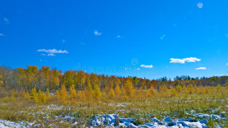 Kall höst i Minnesota Ljusa färger efter snönedgång är den mycket härliga platsen royaltyfria foton