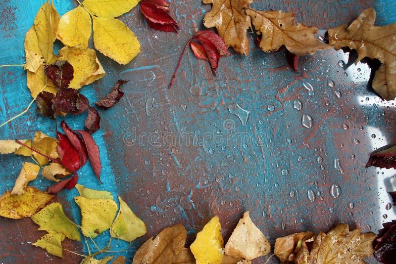 Kall höst och regn arkivbild