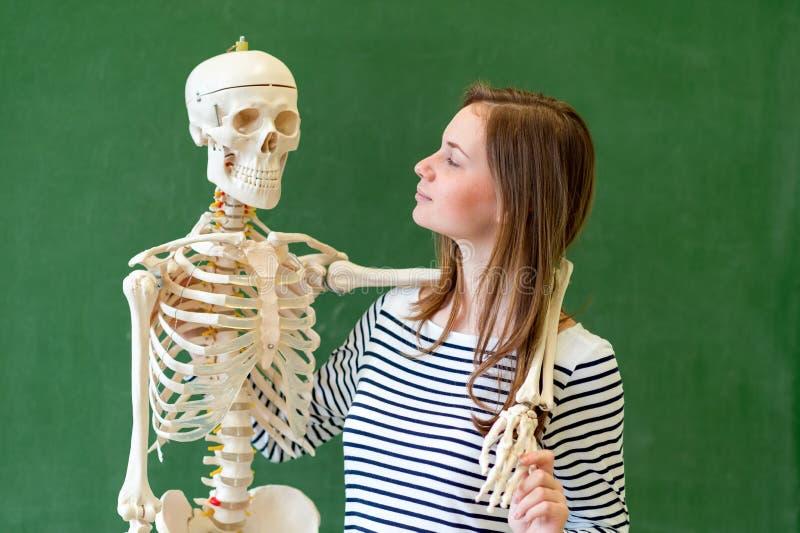Kall kvinnlig högstadiumstudentstående med ett konstgjort människokroppskelett Student som har gyckel i biologigrupp arkivbilder