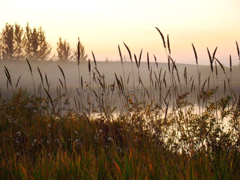 Kall mist över sjön royaltyfri foto