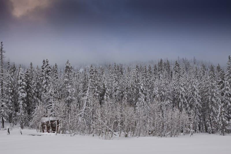 kall skoghyddavinter royaltyfria foton