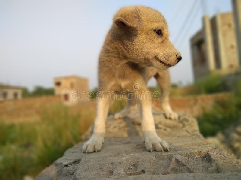 Kall Steet hundkapplöpning arkivbilder