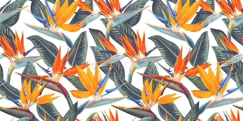 , Kallade den sömlösa modellen med tropiska blommor och sidor av Strelitzia, kranblomman eller fågeln av paradiset royaltyfri illustrationer