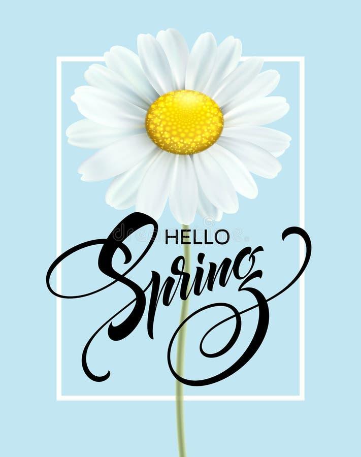 Kalligraphischer Aufschrift hallo Frühling mit Frühlingsblume - blühendes weißes Gänseblümchen Auch im corel abgehobenen Betrag lizenzfreie abbildung