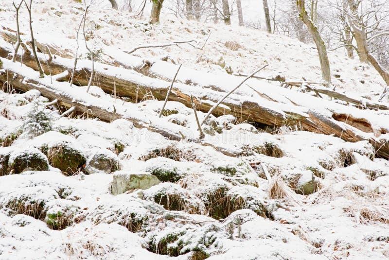 Kallt och dimmigt morgon-, snö- och rimfrostgräs på berget royaltyfria foton