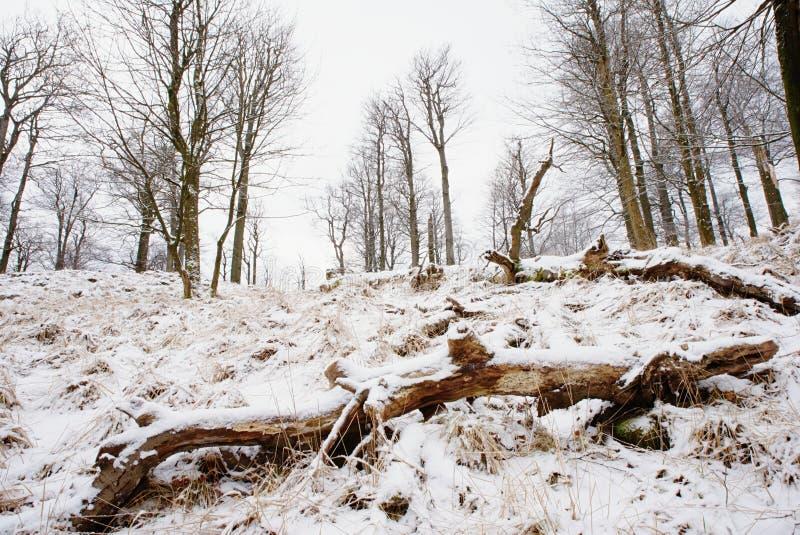 Kallt och dimmigt morgon-, snö- och rimfrostgräs på berget royaltyfri foto
