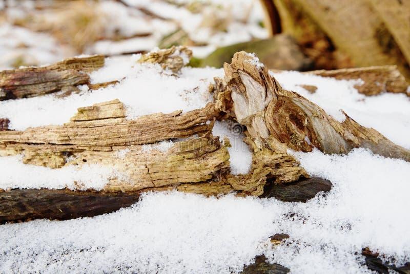Kallt och dimmigt morgon-, snö- och rimfrostgräs på berget royaltyfri bild