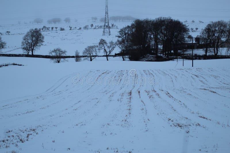 Kallt snöig fält arkivbilder