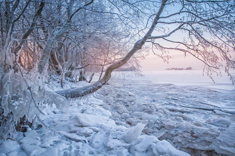 Kallt vinterlandskap med snö, is och trädet royaltyfri bild
