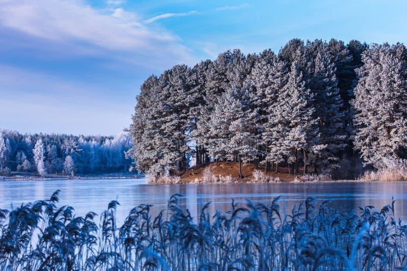 Kalm de winterlandschap van bevroren pijnboombomen in het eiland van het meer stock foto