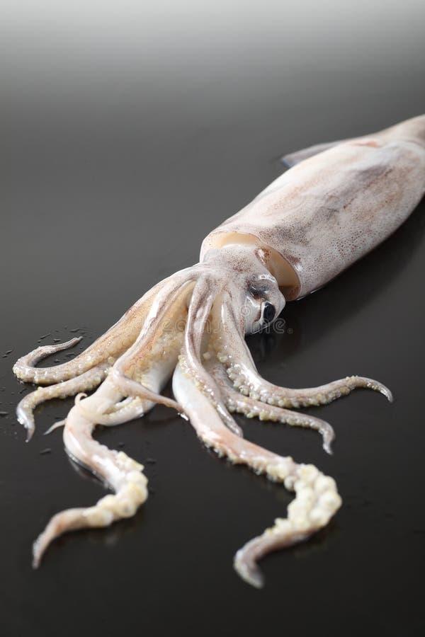 Kalmar lizenzfreies stockbild