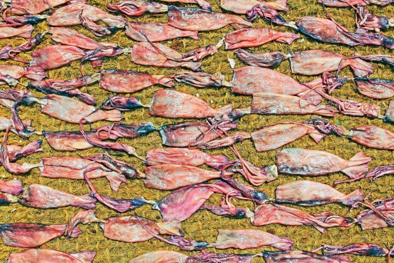 Kalmartrockner in der Sonne lizenzfreie stockbilder