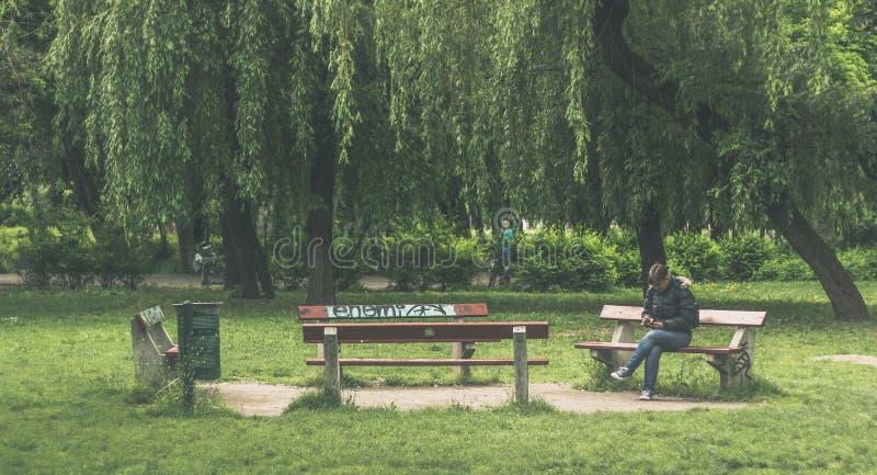 Kalme bank in het park stock afbeeldingen
