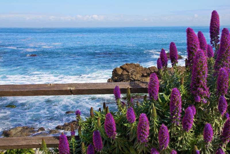 Kalme Oceaan met Purpere Bloemen in de voorgrond royalty-vrije stock afbeelding