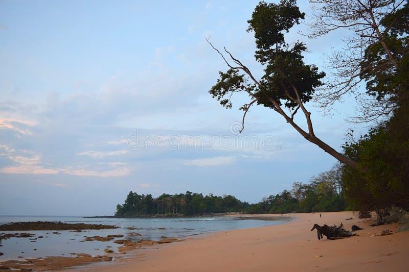 Kalme Wateren van Overzees in Sandy Beach met het Doen leunen van Boom en andere Bomen in Ochtendhemel - het Ontspannen Landschap royalty-vrije stock afbeelding