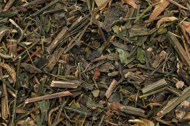 Kalmegh asciutto organico va (paniculata di Andrographis) fotografia stock