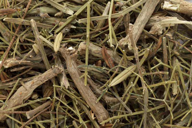 Kalmegh o chiretta & x28 asciutti organici; Paniculata& x29 di Andrographis; immagini stock libere da diritti
