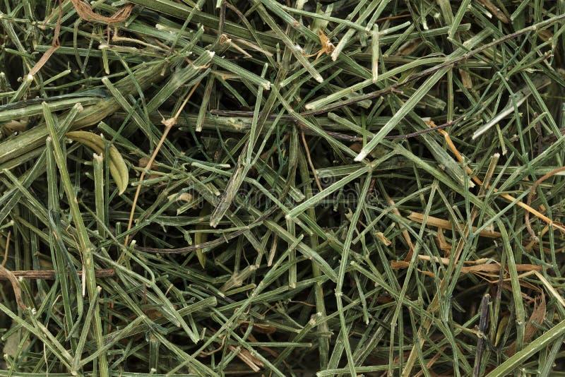 Kalmegh organico o chiretta & x28 verdi; Paniculata& x29 di Andrographis; immagine stock