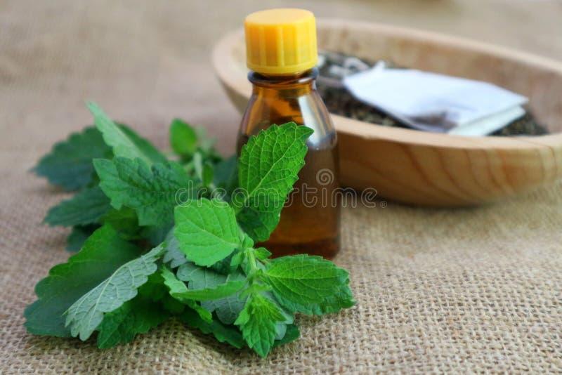 Kalmerend ontspanningskruid, melissa installatieetherische olie of andere vloeistof in een donkere fles stock fotografie