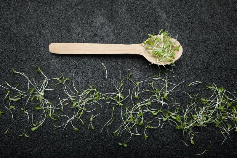 Kalorienarme Nahrung mit vielen Vitaminen Mikrogrüns in einem hölzernen Löffel auf einem schwarzen Hintergrund lizenzfreies stockfoto