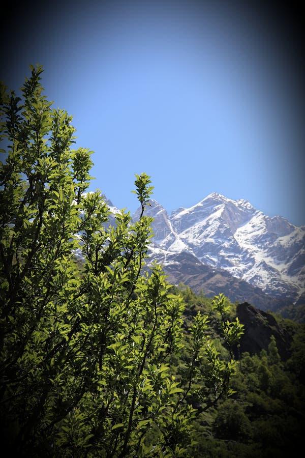 Kalpa, Himachal Pradesh stock fotografie