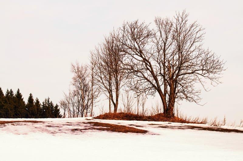 Kalt träd i snöig landskap i solnedgång royaltyfria foton