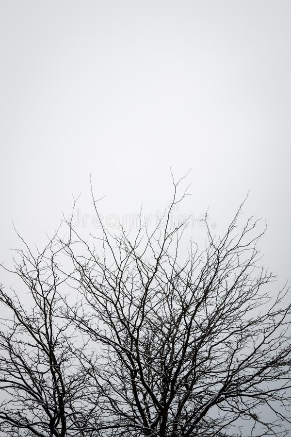 Kalt träd mot klar himmel arkivfoton