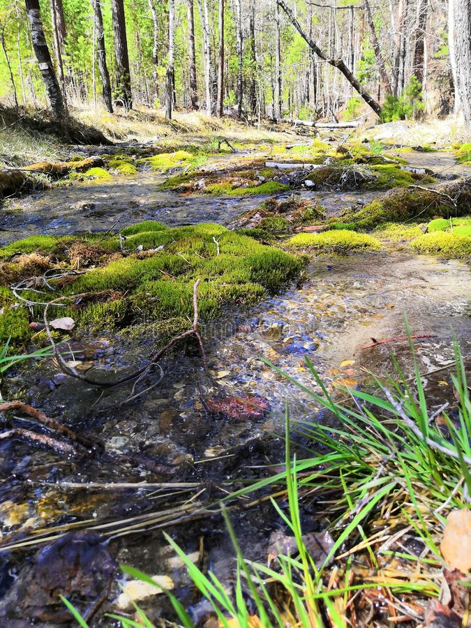 Kalter Frühlingsfluß mit grünem Gras lizenzfreie stockfotografie