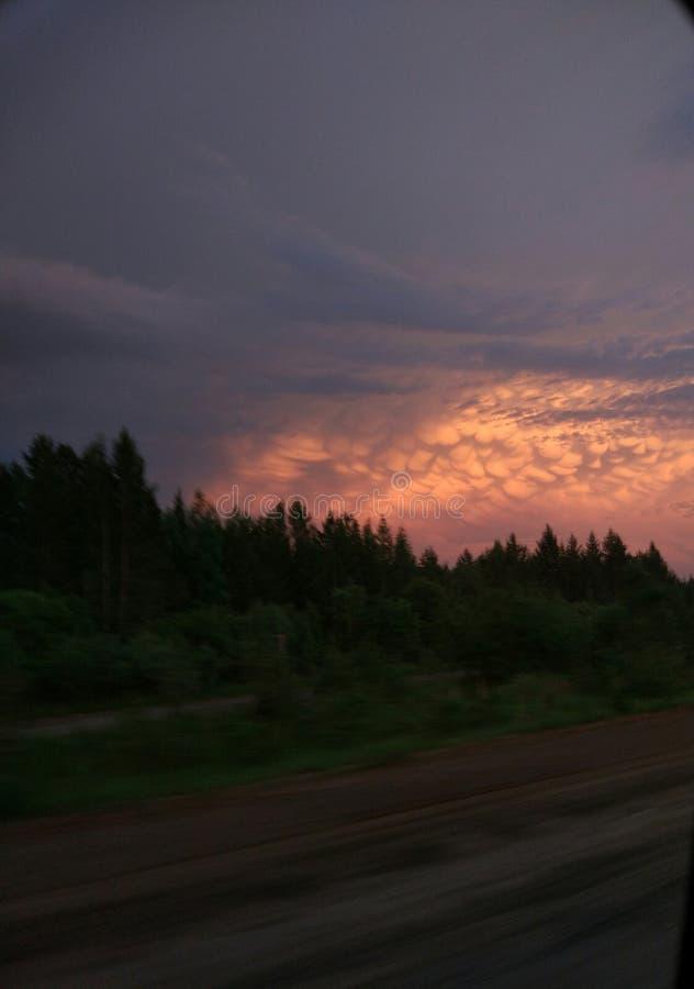 kalter Wald lizenzfreie stockfotografie