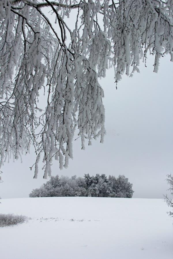kalter Wintertag stockbilder