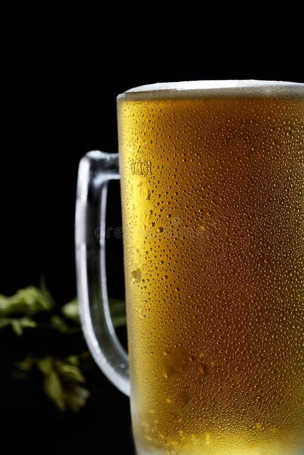 Kaltes schaumiges Bier in einem Glas und in einem Hopfen auf einem schwarzen Hintergrund lizenzfreies stockfoto