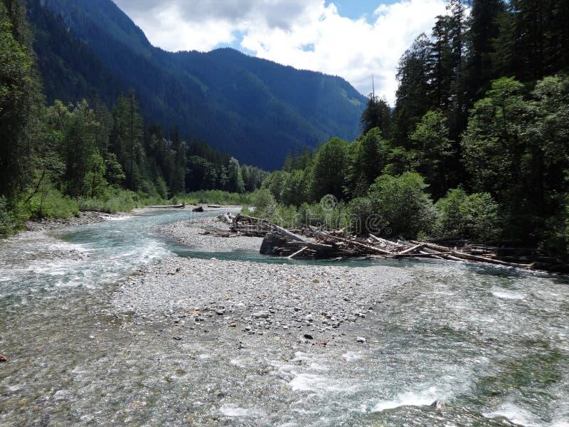 Kaltes Wasser, das in einen Gebirgsfluss in den Nordkaskaden fließt stockfotos