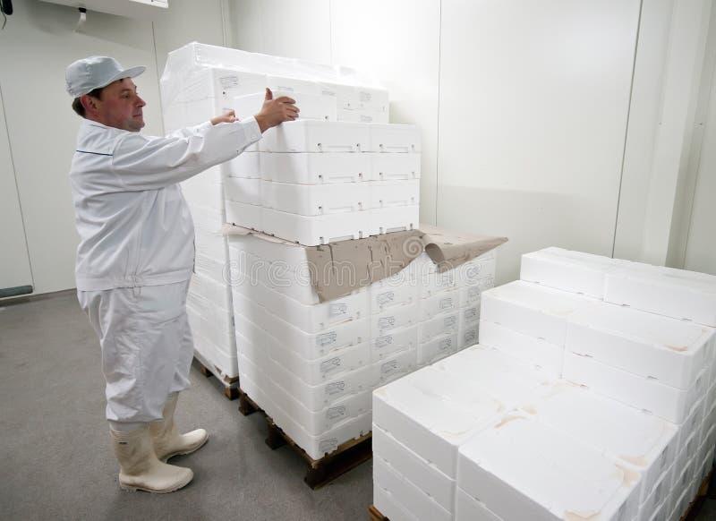 Kaltlagerungsarbeitskraft lizenzfreie stockbilder