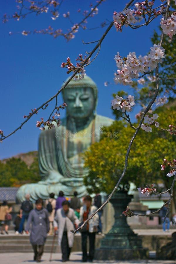 Download Kamakura stock image. Image of kanto, buddha, kotokuin - 4991971