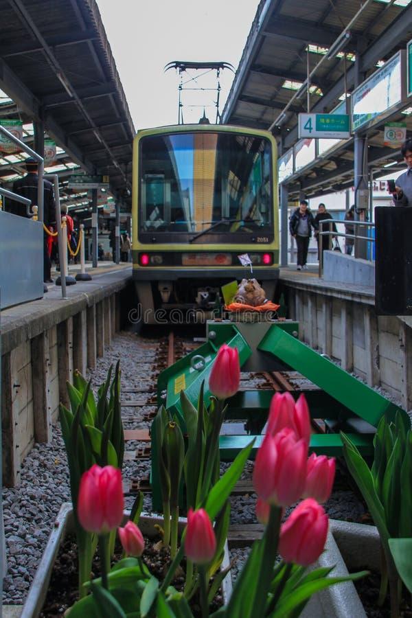 2013 01 06, Kamakura, Japão Opinião dianteira o trem e as tulipas na estrada de ferro fotografia de stock royalty free