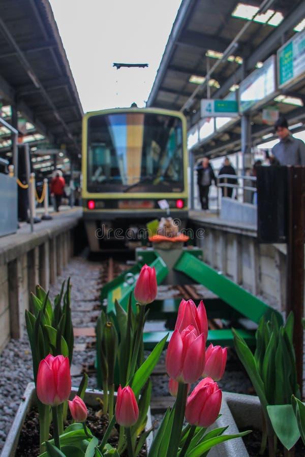 2013 01 06, Kamakura, Japonia Frontowy widok tulipany przy koleją i pociąg fotografia stock