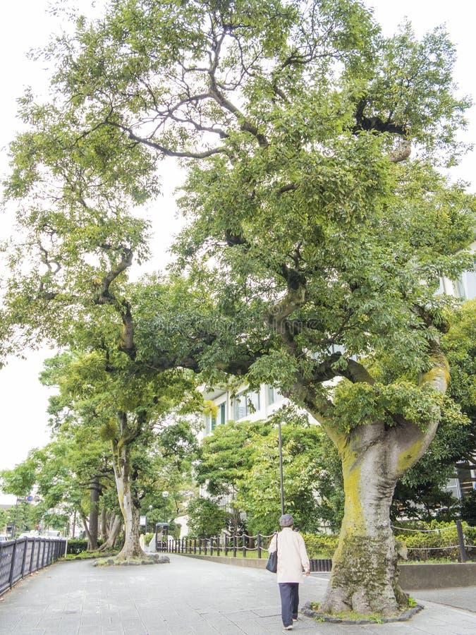 Download Kamakura main street editorial photo. Image of trees - 35099836