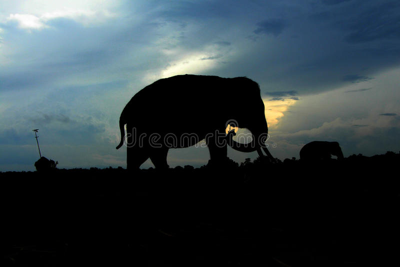 Kambas de manière de siluet d'éléphant image stock