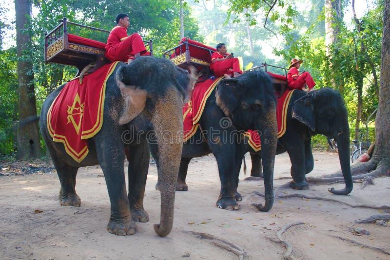 Kambodżańscy słoni jeźdzowie zdjęcie royalty free